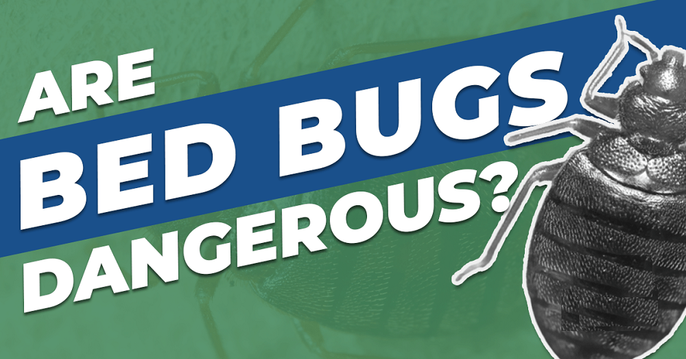 How serious or Dangerous Bed Bugs are AwesomePest