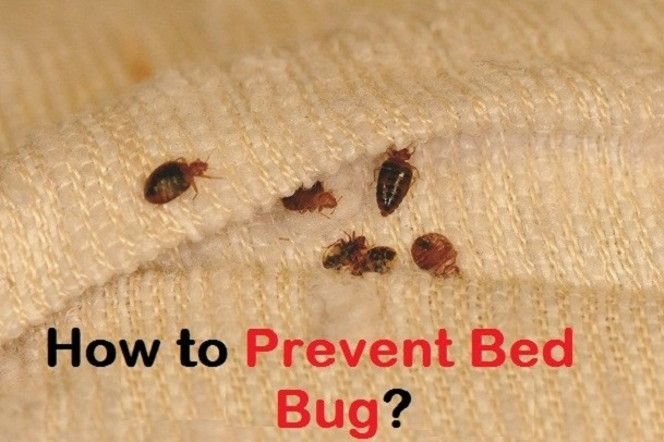 How to prevent Bed Bugs Awesomepest