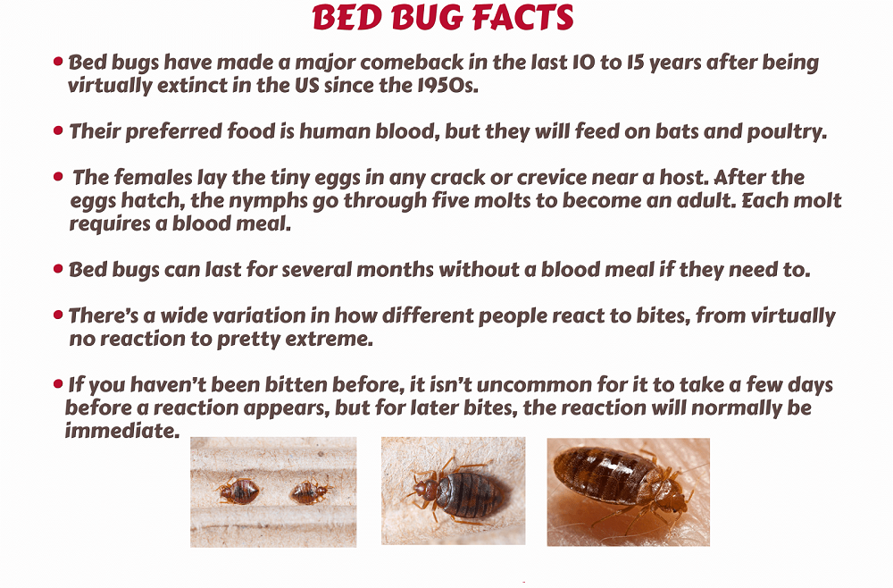 Interesting Facts about Bed Bugs Awesomepest