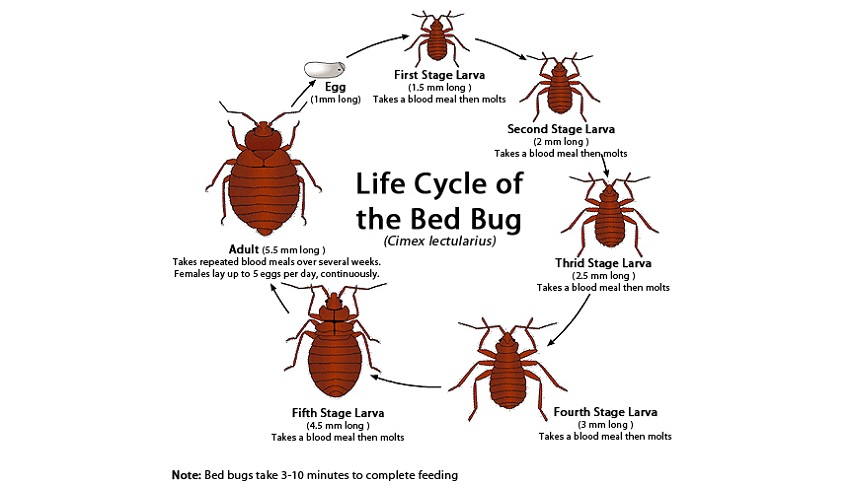 Production and Life cycle of AwesomePestControl