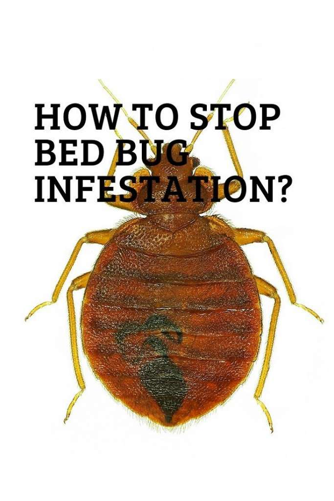 Stop Bugs infestation Awesome Pest Awesomepest