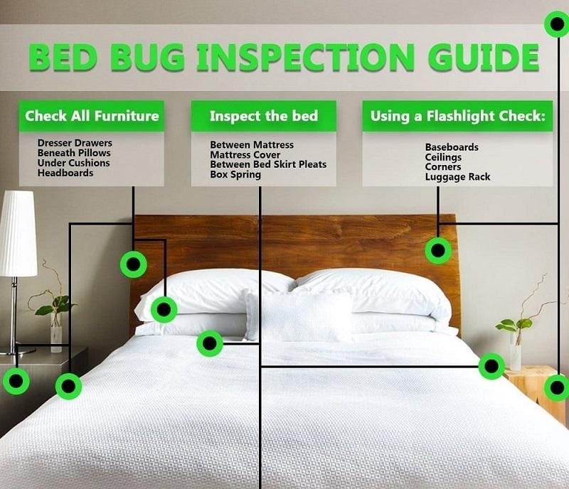 Habitats of Bed Bugs Awesome Pest Awesomepest