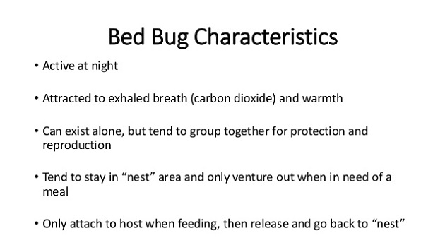 characteristics of bed bugs Awesome Pest Awesomepest