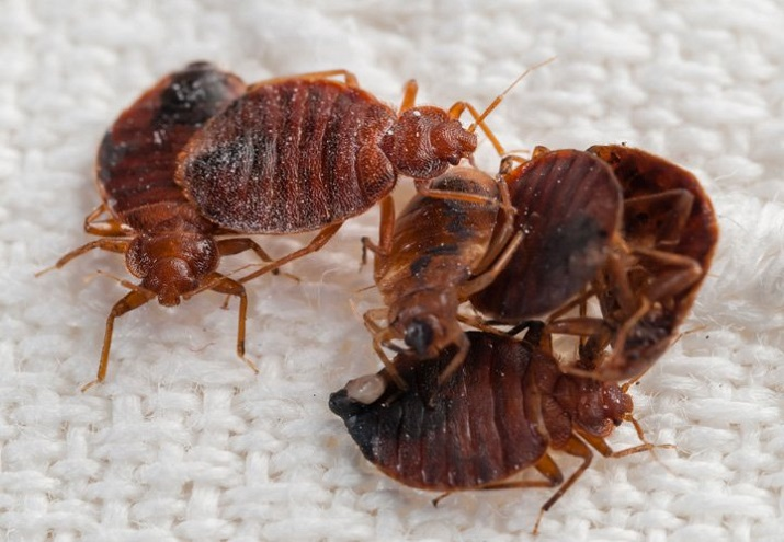 Bed Bugs Extermination Barrie by Awesomepest