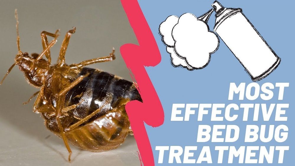 Bed Bugs Treatment Awesomepest