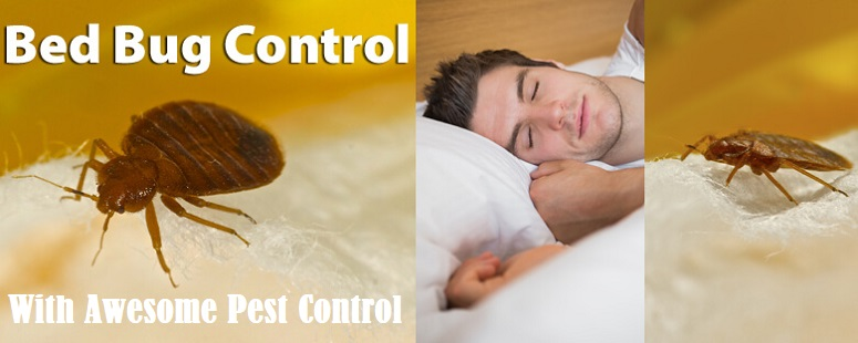 Choose Awesome Pest Control to Control Bed Bugs Awesomepest