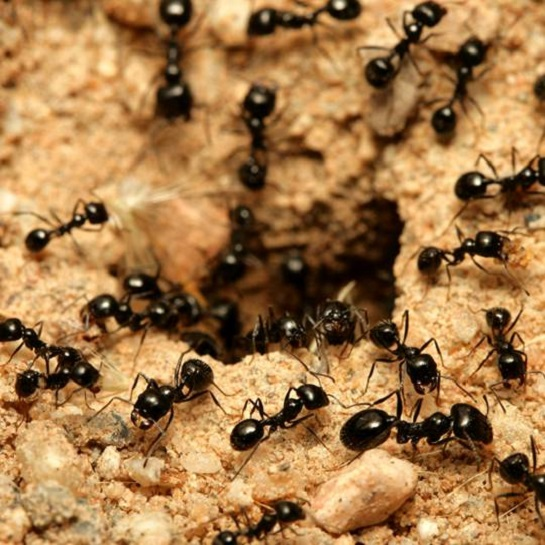 Common Signs of ants Awesomepest