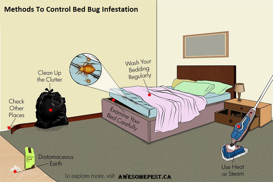 Methods to control Bed Bug Infestation Awesomepest