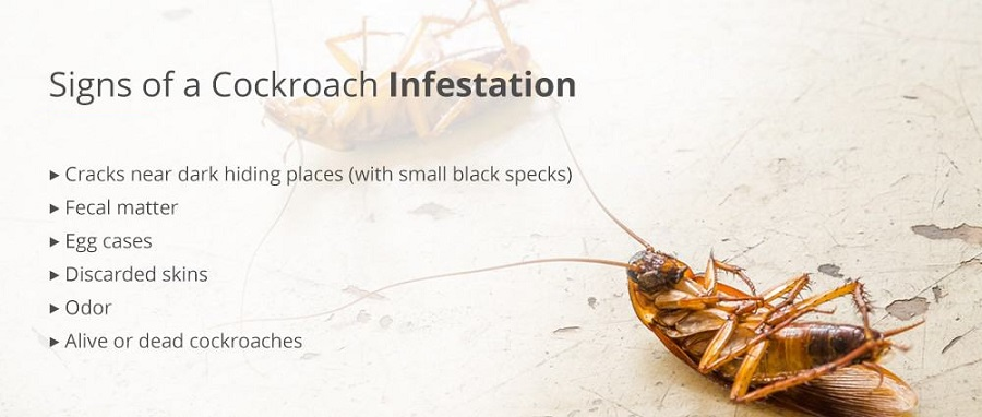 Signs of Cockroach Infestation AwesomePest