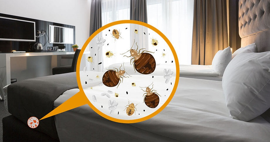 Why we choose Awesome Pest Control to Control Bed Bugs with Awesomepest