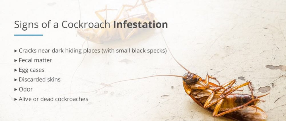 Cockroaches infestations by Awesomepest
