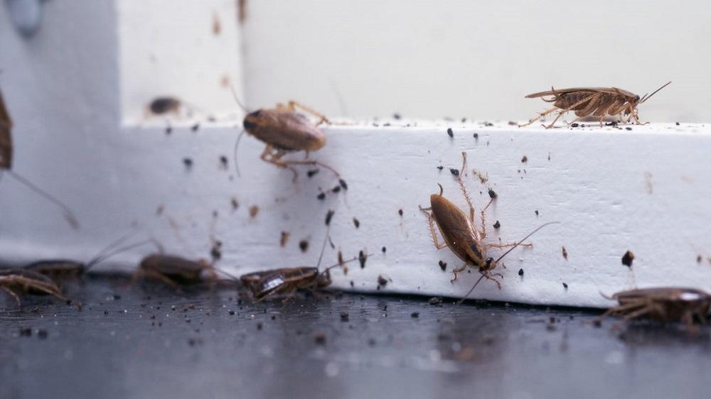 Cockroaches problems Installmart