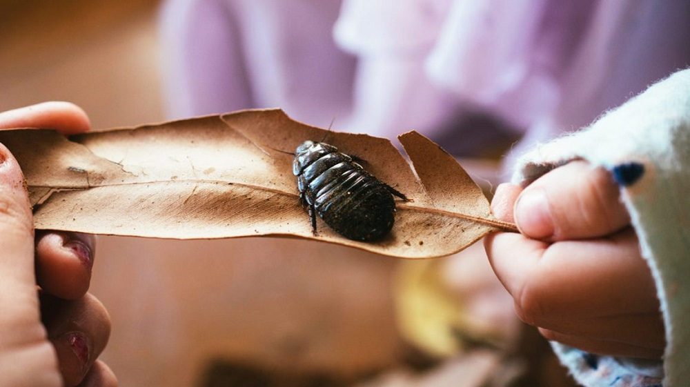Habits of Cockroaches Awesomepest Control