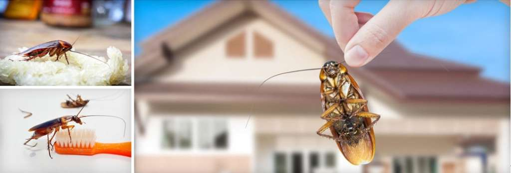 cockroaches control services Awesomepest Control