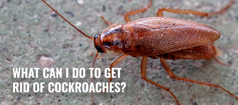 get rid of Cockroaches Awesomepest