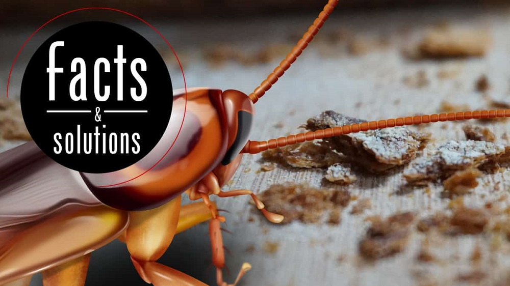 Awesomepest facts about cockroaches