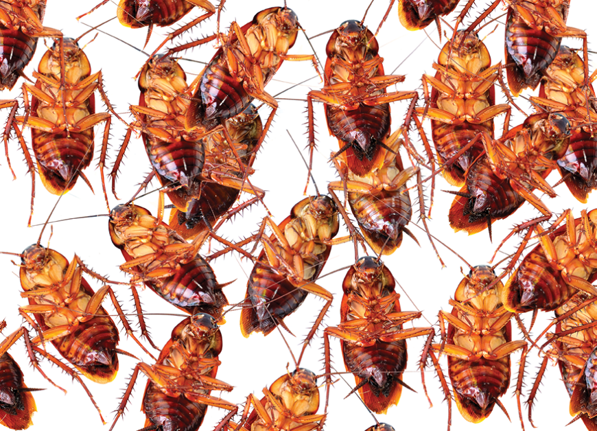 Characteristics of Cockroaches Awesomepest