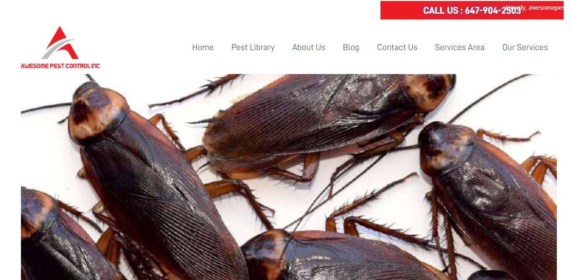 Choose Awesome Pest Control Services to Control Cockroaches