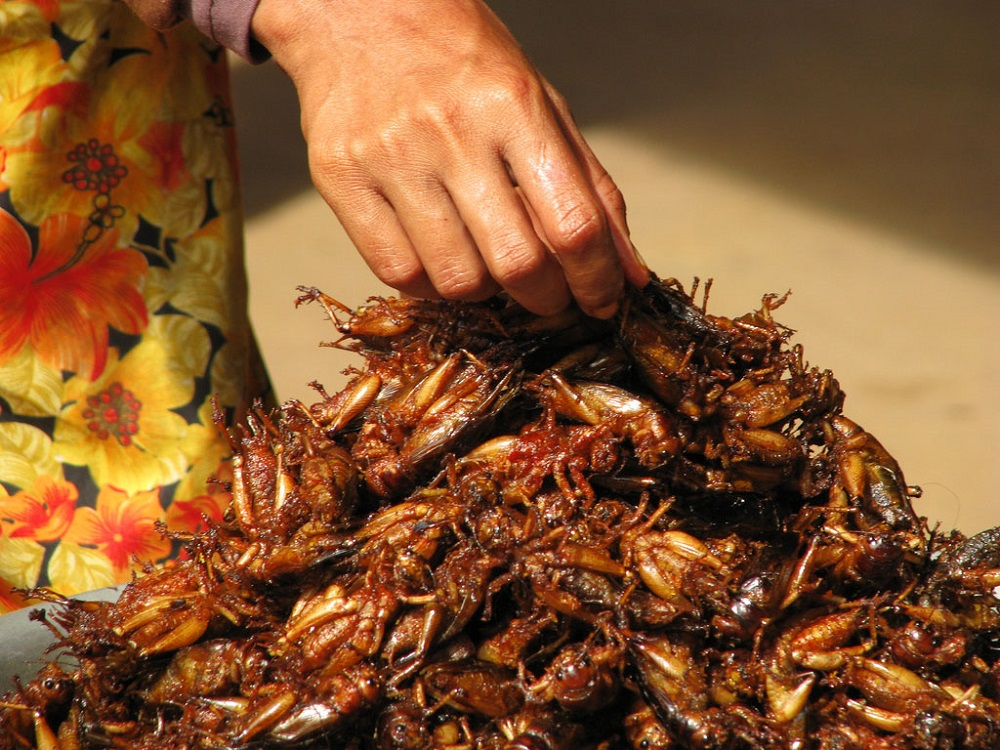 Cockroaches attract to alcohol Awesomepest Control