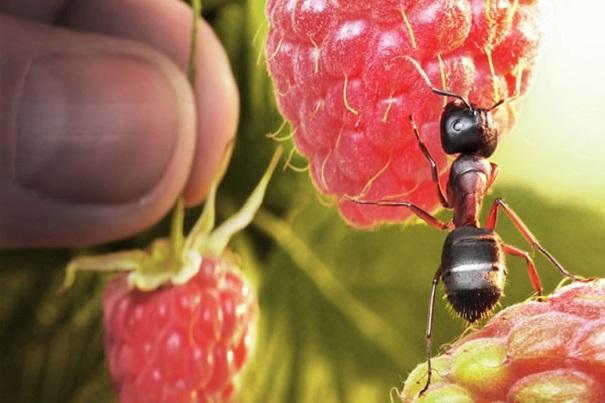 Feeding Habits of Carpenter Ants Awesomepest