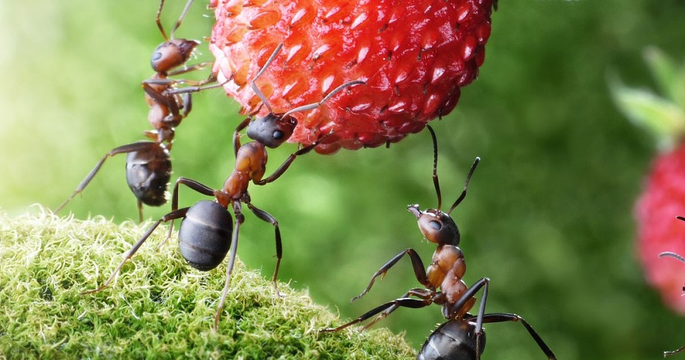Feeding Habits of Carpenter Ants by Awesomepest