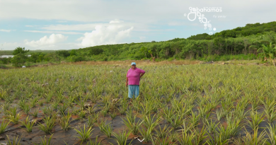 Lady of the Pineapple Fields