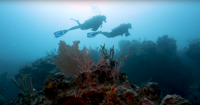 Andros: Untouched Underwater Beauty
