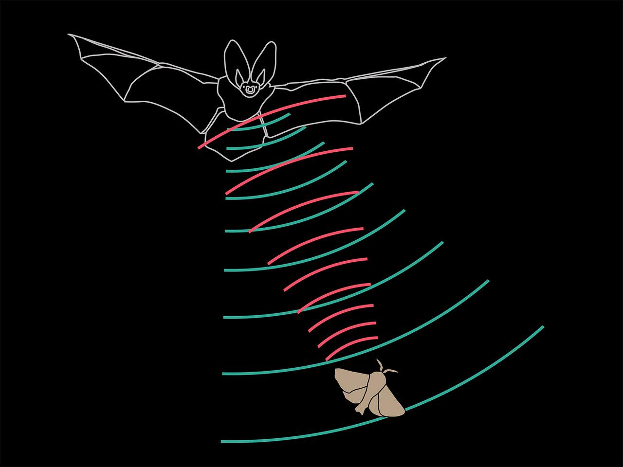 Fledermaus, Ultraschall