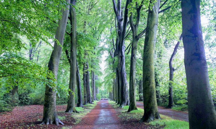 het bos door de bomen zien