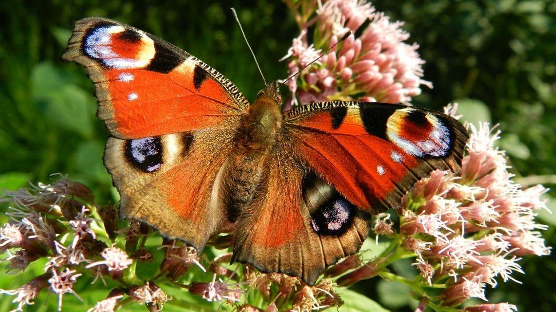 Insekter skadas av EMF enligt forskning