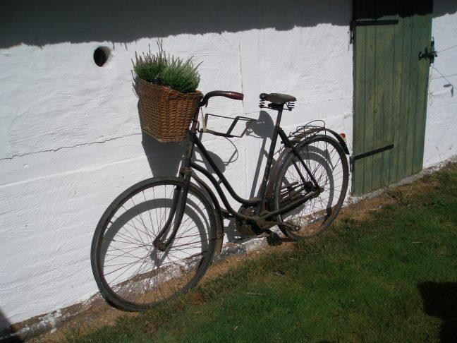 Gammel cykel, med planter i cykelkurv.