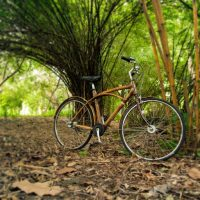 Bamboo bike in a bamboo forest in Bangkok