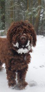 Orel im Schnee