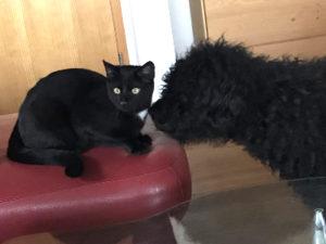 Marcelino und Pamina