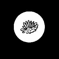 Logo_Ringelblume_neu
