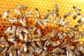 Working in the Hive