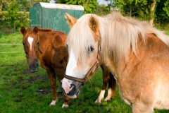 pferde-2019
