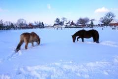 winter-07