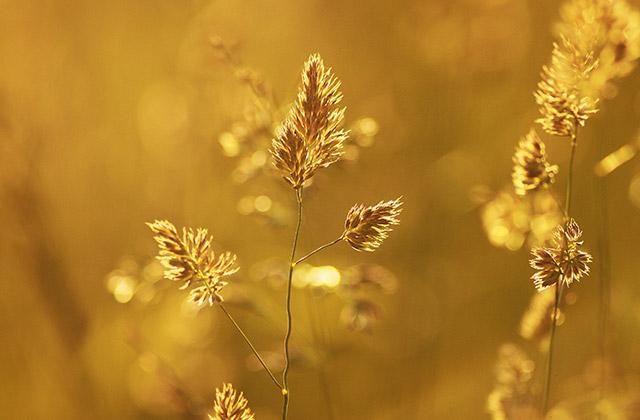 gouden natuur als metafoor voor het gelukzalig gevoel van de Chi Yang massage