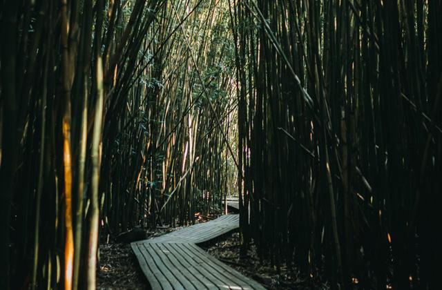 Rustgevend bamboe bos sfeer