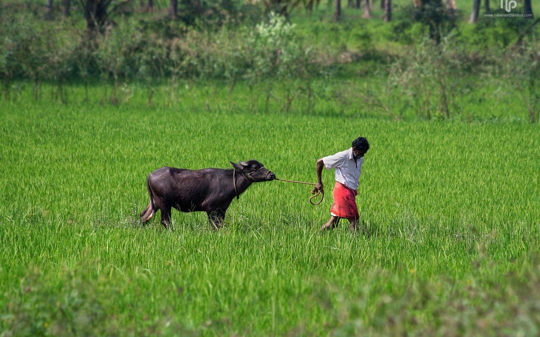 Farmers, Procurement and Agripreneurship in India