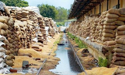 Guaranteed procurement of food grains by FOOD CORPORATION OF INDIA needs to stop