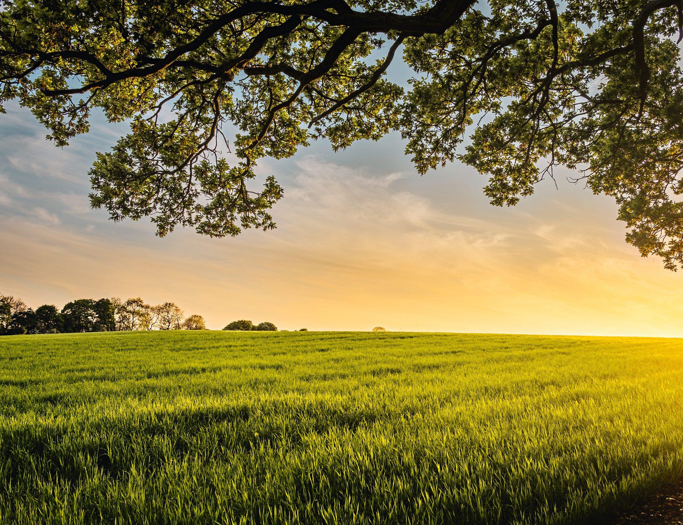 REVANSCH FÖR LANTBRUKET: Bönder – de nya hjältarna?
