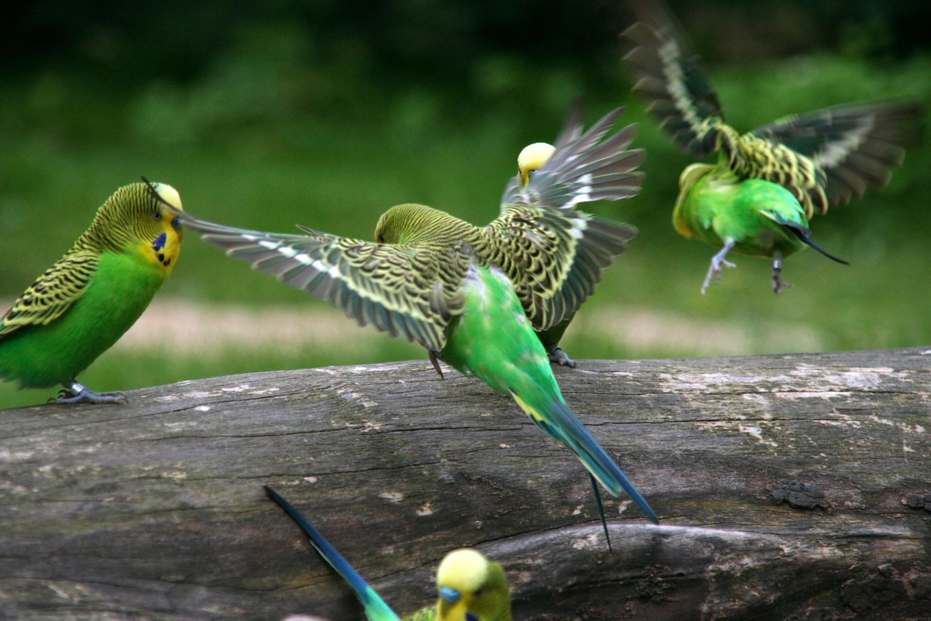 HOPPSAN I DEN DIGITALA VÄRLDEN: På jakt efter algoritmernas kanariefågel