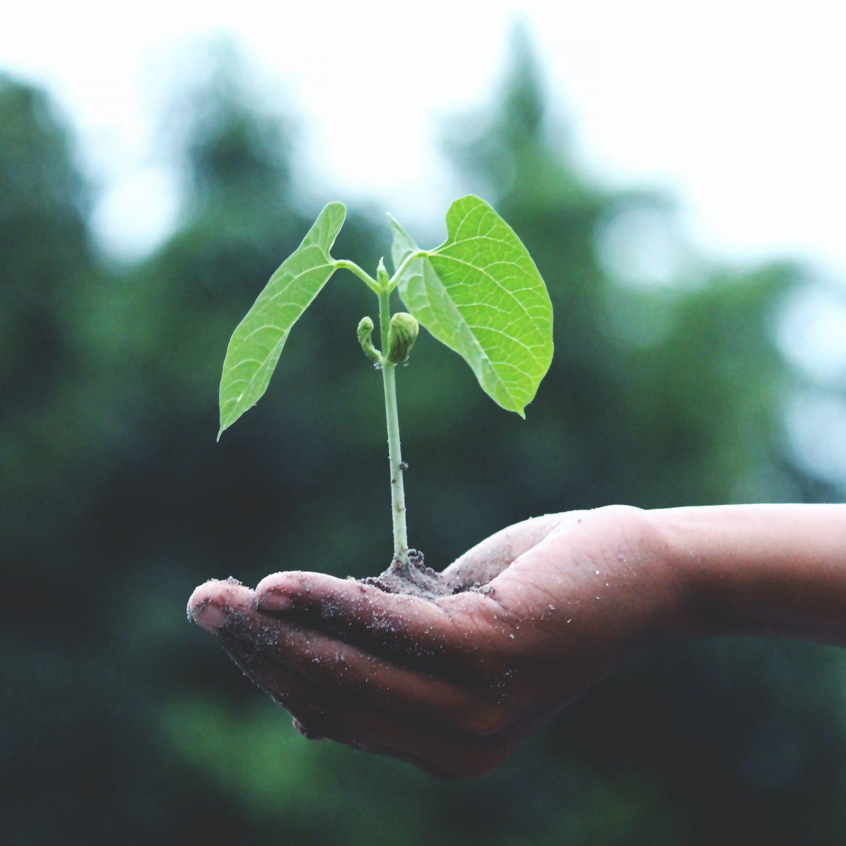NYA HÅLLBARA AFFÄRSMODELLER: Härifrån till hållbarheten