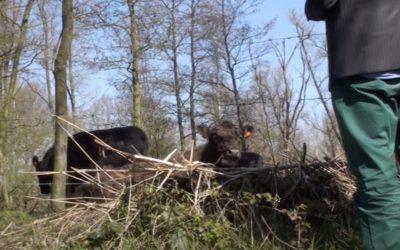 DDL200326-Video
