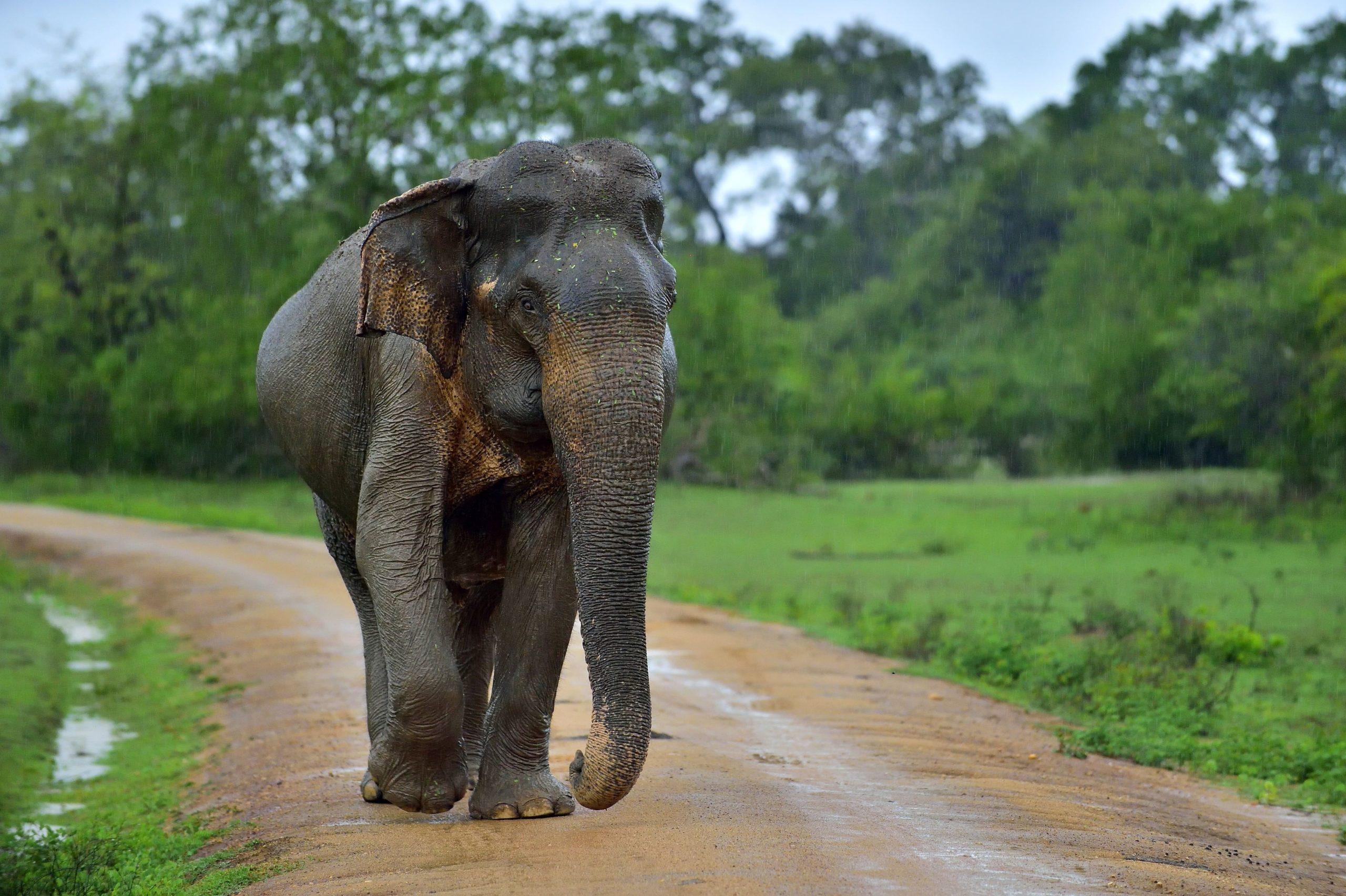 surfing sri lanka elephants