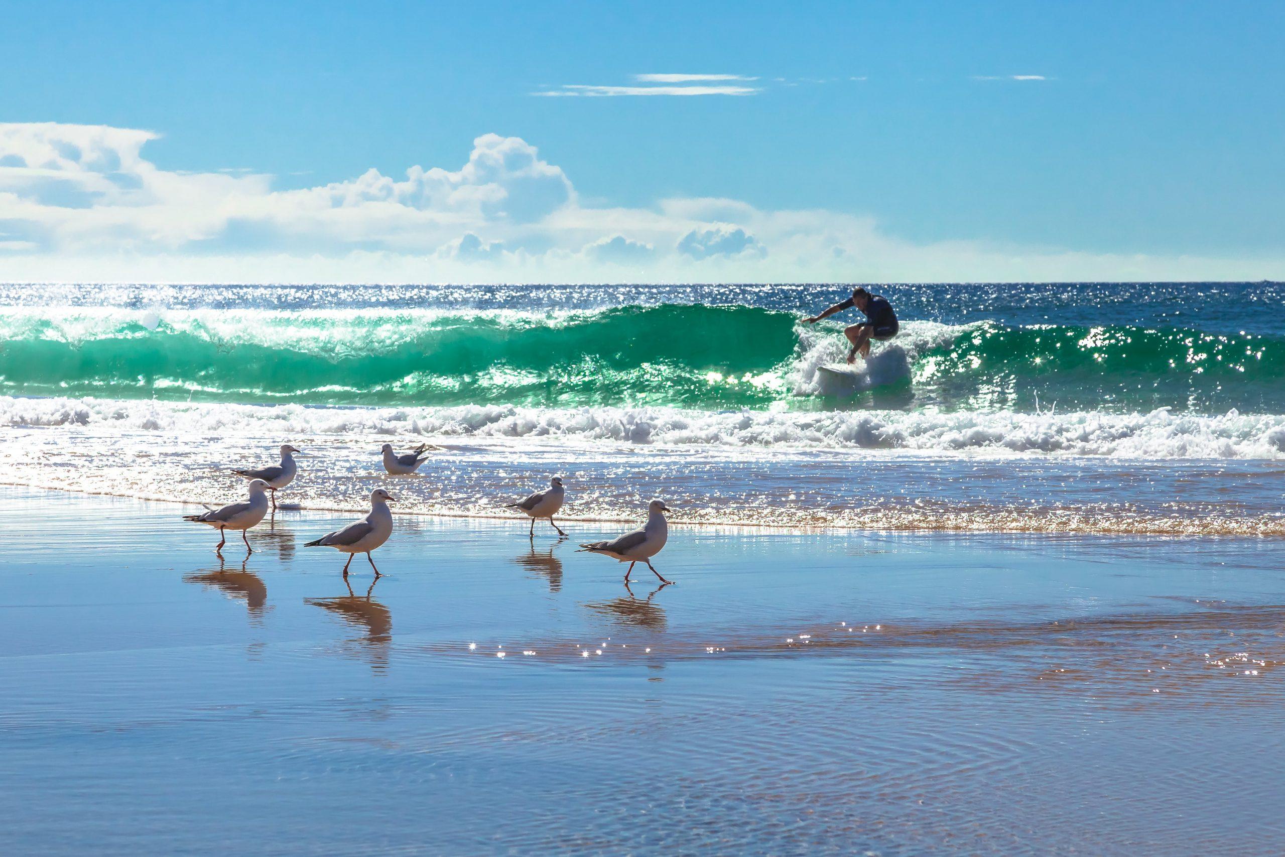 surfing beaches in Sydney