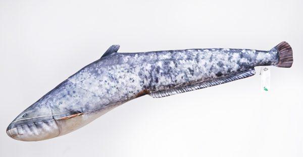 Gaby Meerval Wels Catfish