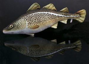 Gaby Kabeljauw Cod viskussen